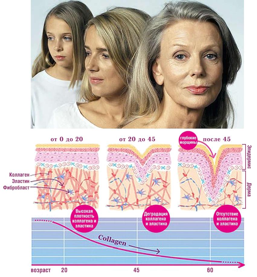 Коллаген и гиалуроновая кислота в коже